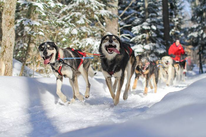 Dog sledding at Nature's Kennel in McMillan