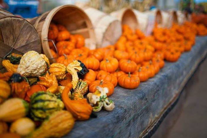 Bounty of pumpkins and gourds