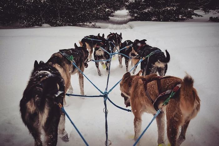 A musher's point of view