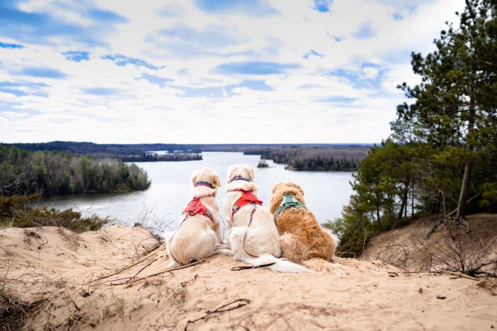 The Wild Goldens sitting on sand overlooking the water in Oscoda